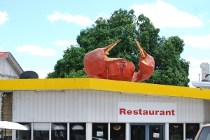 The first of many giant things! Crab in Miriam Vale QLD